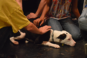 Petey, a four month old rescue, hung out after the assembly to meet with students from all grades. Photo by Tim Carroll